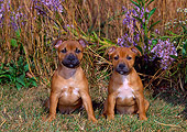 PUP 14 CE0113 01