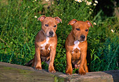 PUP 14 CE0114 01