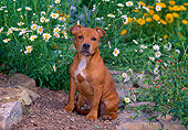 PUP 14 CE0115 01
