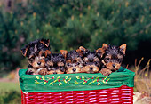 PUP 14 CE0117 01