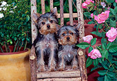 PUP 14 CE0118 01