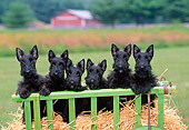 PUP 14 CE0122 01