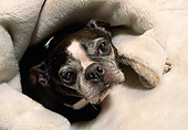 PUP 14 DC0010 03