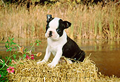 PUP 14 FA0001 01