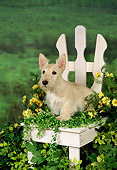 PUP 14 FA0005 01
