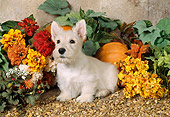 PUP 14 FA0006 02