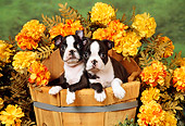 PUP 14 FA0013 01