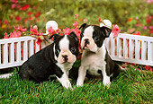 PUP 14 FA0015 01