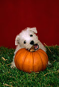 PUP 14 FA0018 01