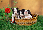 PUP 14 FA0023 01