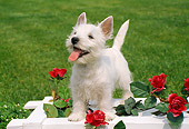 PUP 14 FA0026 01