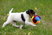PUP 14 KH0002 01