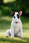 PUP 14 KH0003 01