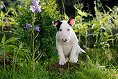 PUP 14 KH0005 01