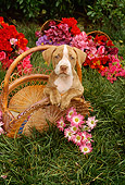 PUP 14 RC0005 01