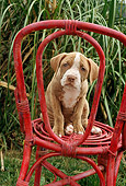 PUP 14 RC0006 01