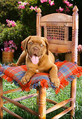 PUP 14 RC0008 01