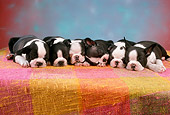 PUP 14 RC0012 01