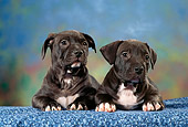 PUP 14 RC0016 01