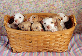PUP 14 RC0017 01