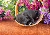 PUP 14 RC0019 01