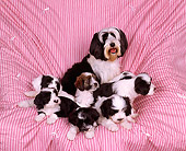 PUP 14 RK0003 02