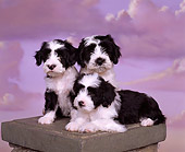 PUP 14 RK0005 13