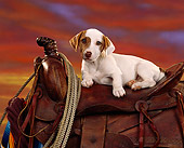 PUP 14 RK0034 02