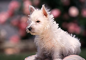 PUP 14 RK0040 02