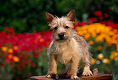 PUP 14 RK0048 02