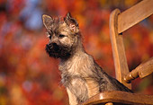 PUP 14 RK0051 01