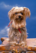 PUP 14 RK0069 02