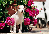 PUP 14 SS0003 01