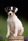 PUP 14 SS0005 01