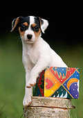 PUP 14 SS0006 01