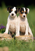 PUP 14 SS0008 01