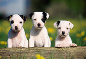 PUP 14 SS0011 01