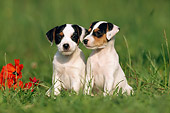 PUP 14 SS0012 01