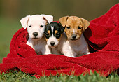 PUP 14 SS0014 01