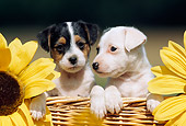 PUP 14 SS0015 01