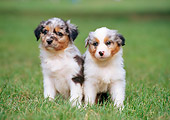 PUP 15 CB0003 01