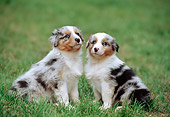 PUP 15 CB0004 01