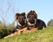 PUP 15 CB0010 01