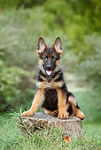 PUP 15 CB0012 01