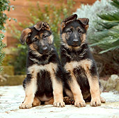 PUP 15 CB0016 01