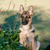 PUP 15 CB0017 01