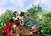 PUP 15 FA0006 01