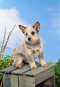 PUP 15 FA0007 01