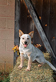 PUP 15 FA0008 01