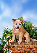 PUP 15 FA0009 01